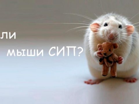 Строительство домов в Крыму - Опасны ли мыши для дома из сип-панелей